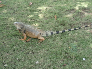 We have squirrels in the parks they have reptiles here