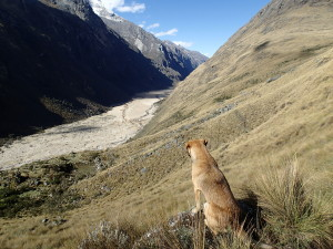 "My companion "" Carlos"" looking over the valley"