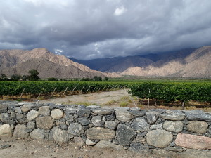 Wine Region Cafayate