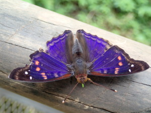 Butterflies in all colours