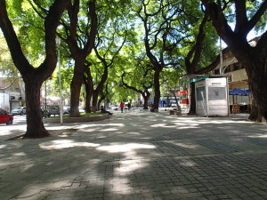 So many shade trees in Mendoza